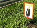 59294294_6_1000x700_rasaduri-de-legume-de-la-producator-.jpg